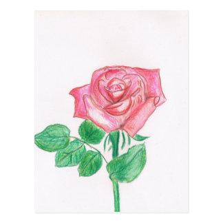Color de rosa postales
