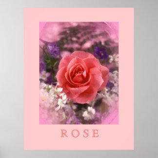 Color de rosa póster