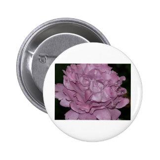 color de rosa, púrpura 2 pin