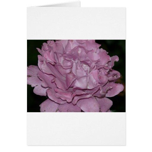 color de rosa, púrpura 2 tarjeta de felicitación