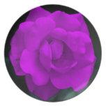 Color de rosa púrpura bonito y su significado plato de cena
