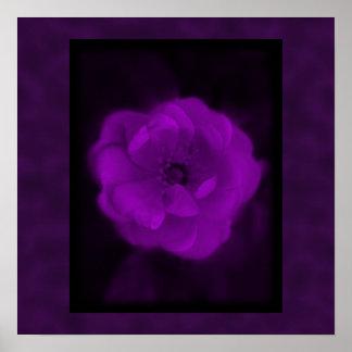 Color de rosa púrpura. Con púrpura negra y oscura Posters