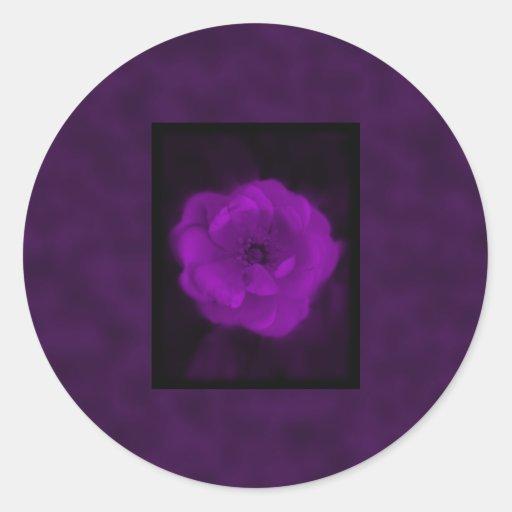 Color de rosa púrpura. Con púrpura negra y oscura Etiqueta Redonda