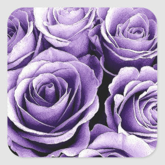 Color de rosa PÚRPURA de la PUESTA DEL SOL - sello Calcomanía Cuadradase