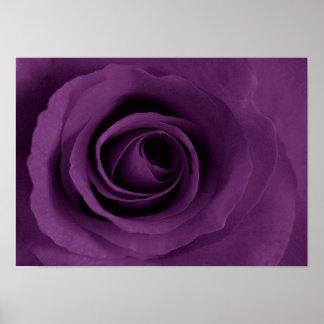 color de rosa púrpura del poster de Etsy