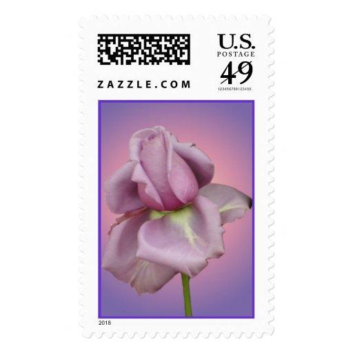 Color de rosa púrpura franqueo