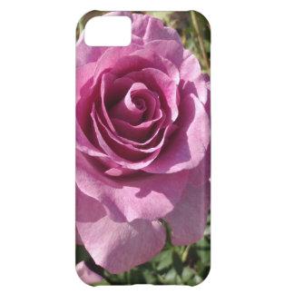 Color de rosa púrpura