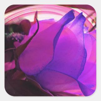 Color de rosa púrpura colcomanias cuadradas personalizadas