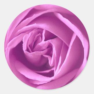 Color de rosa púrpura pegatina redonda