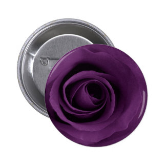 Color de rosa púrpura pins