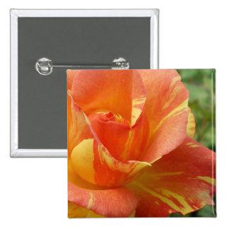 Color de rosa rayado anaranjado y amarillo pin cuadrada 5 cm