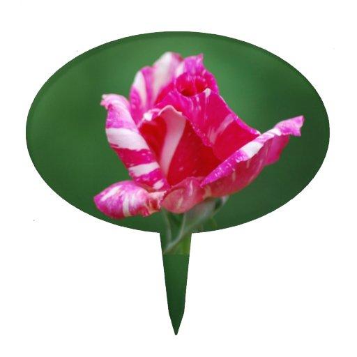 Color de rosa rayado del rosa y blanco figura para tarta