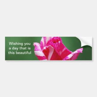 Color de rosa rayado del rosa y blanco pegatina de parachoque