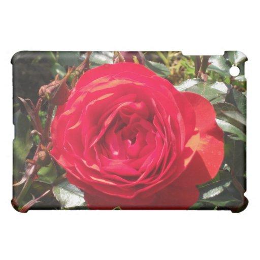 Color de rosa rojo oscuro