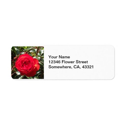 Color de rosa rojo oscuro etiquetas de remite