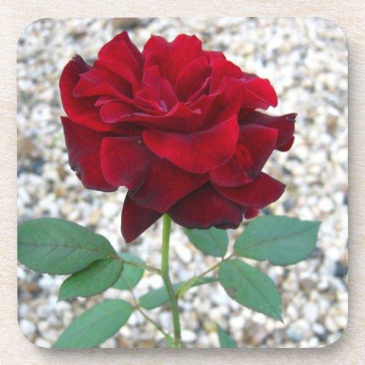 Color de rosa rojo oscuro posavasos
