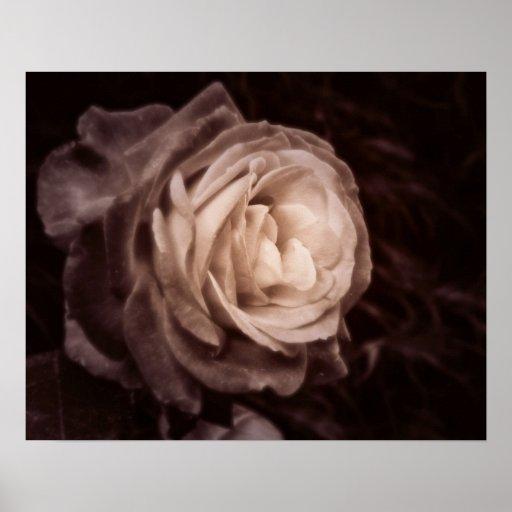 Color de rosa romántico para un espacio íntimo impresiones