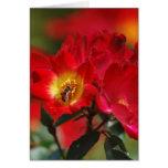 Color de rosa romántico y significado felicitacion
