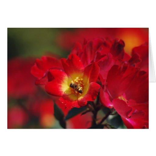 Color de rosa romántico y significado felicitaciones