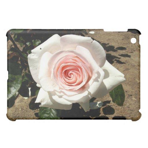 Color de rosa rosa claro