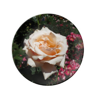 Color de rosa rosa claro plato de cerámica