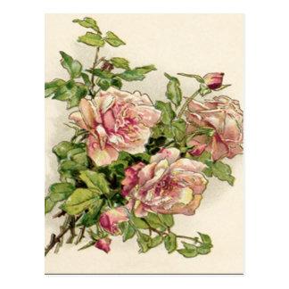 Color de rosa rosáceo del verano postal