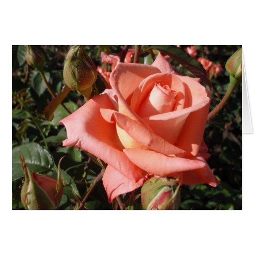Color de rosa rosado amelocotonado felicitación