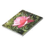 Color de rosa rosado bloc