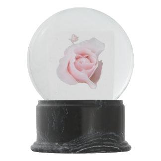 Color de rosa rosado bola de nieve