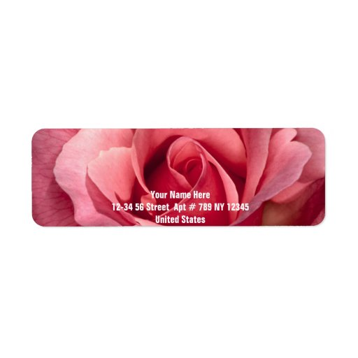 Color de rosa rosado bonito etiqueta de remite