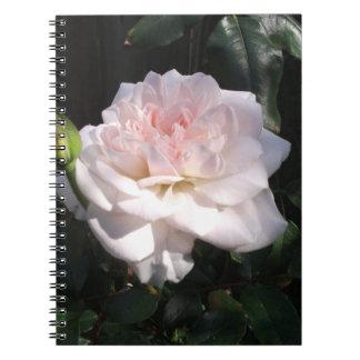 Color de rosa rosado bonito libros de apuntes