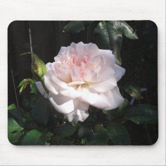Color de rosa rosado bonito mousepad