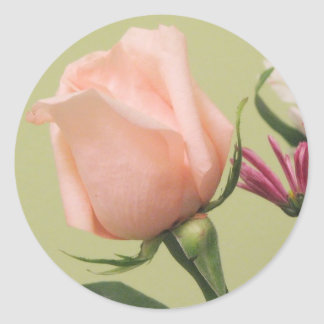 Color de rosa rosado bonito pegatina redonda