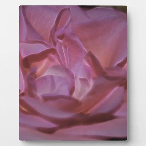 Color de rosa rosado bonito placas con fotos