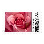 Color de rosa rosado bonito sellos