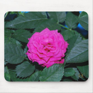 Color de rosa rosado bonito tapete de ratones