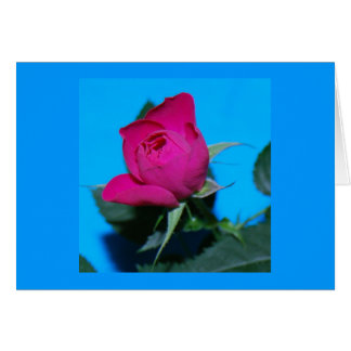 Color de rosa rosado bonito tarjeton