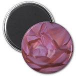 Color de rosa rosado bonito y significado imanes para frigoríficos