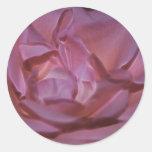 Color de rosa rosado bonito y significado etiqueta redonda
