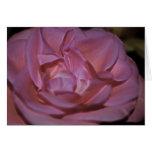 Color de rosa rosado bonito y significado tarjeta