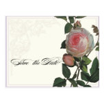 Color de rosa rosado botánico, reserva de la lila