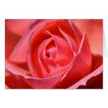 Color de rosa rosado brillante felicitación