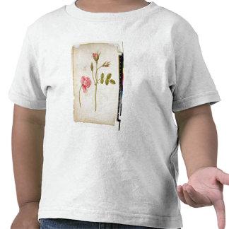 Color de rosa rosado c 1568 camisetas