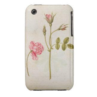Color de rosa rosado, c.1568 Case-Mate iPhone 3 funda