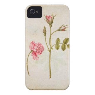 Color de rosa rosado, c.1568 iPhone 4 fundas