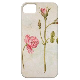 Color de rosa rosado, c.1568 iPhone 5 fundas