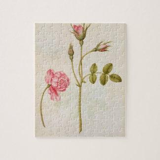 Color de rosa rosado, c.1568 puzzles