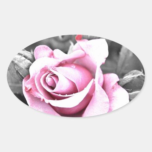 Color de rosa rosado con el fondo negro pegatina ovalada