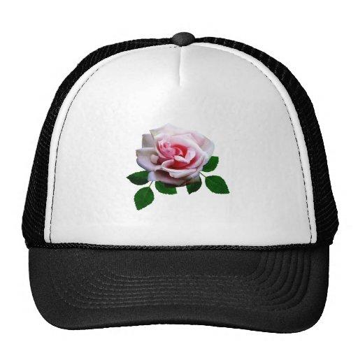 Color de rosa rosado con las hojas gorra