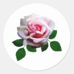 Color de rosa rosado con las hojas pegatinas redondas